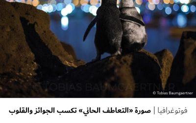 """فوتوغرافيا : صورة """" التعاطف الحاني """" تكسب الجوائز والقلوب"""