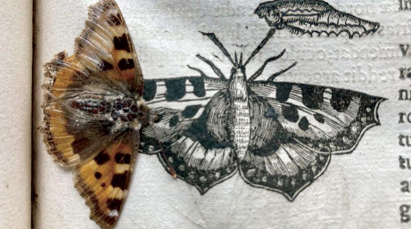 العثور على فراشة عمرها 400 عام داخل كتاب