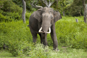 البرق يقتل 18 فيلا على الأقل في الهند
