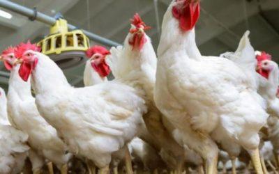 زراعة غزة تحذر من كارثة بدأت تحل على قطاع الإنتاج الحيواني
