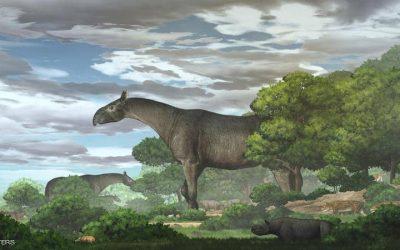"""عاش قبل 26 مليون سنة.. اكتشاف حفريات """"وحيد قرن بلا قرن"""""""