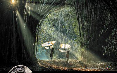 """جائزة حمدان بن محمد للتصوير تنشر الصور الفائزة بمسابقة """"ضوء النهار"""""""
